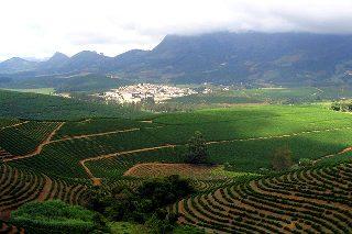 Terrassodling av kaffe i Brasilien